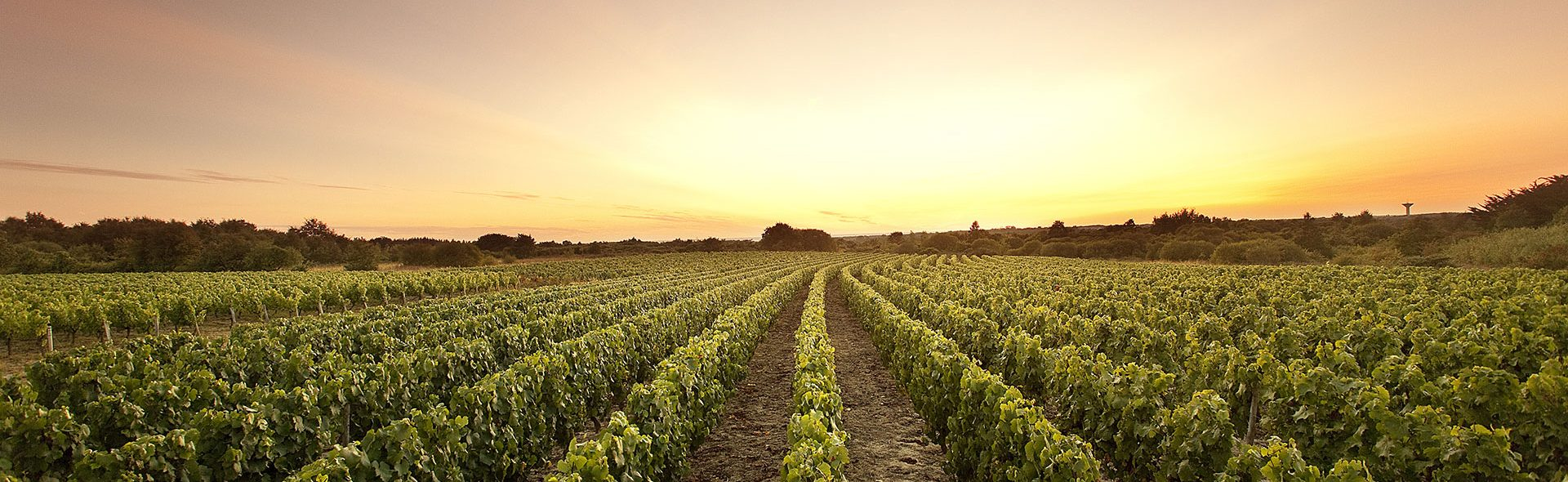 Camping Club Mahana : Vignobles Des Fiefs Vendéens Brem Sur Mer A